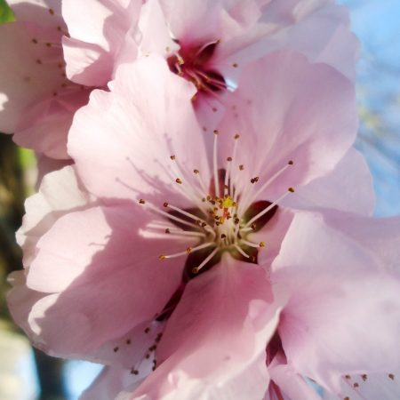 Herastrau-flower